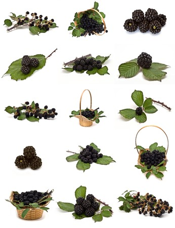 Blackberries collection isolated on a white background. photo