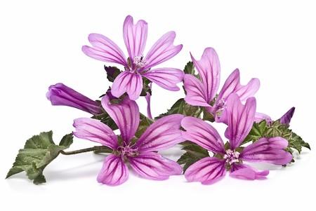 Mauve flowers.