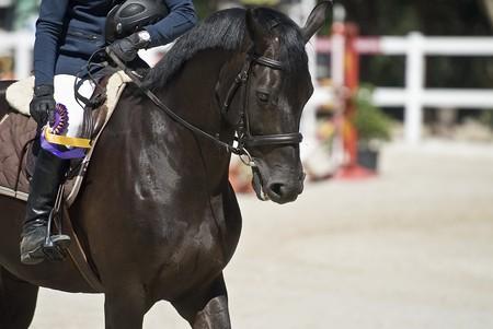 whips: Equestrian jump.