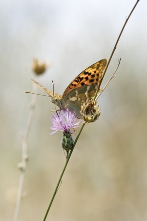 Butterfly in its environment. photo