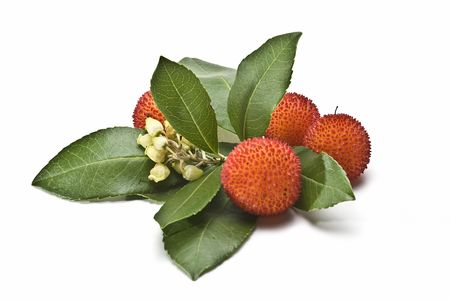 Arbutus fruit on a white background.