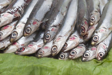 Fresh anchovies prepared to be sold. Stock Photo - 8759665