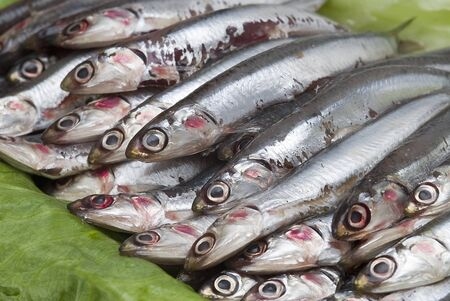 Fresh anchovies prepared to be sold. photo
