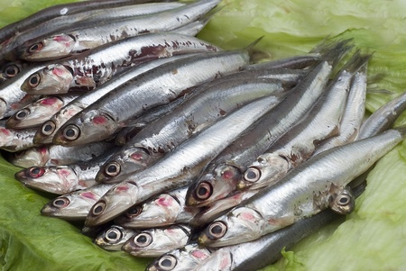 Fresh anchovies on some green leaves. photo