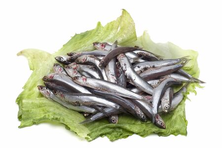 Fresh anchovies isolated on a white background. photo