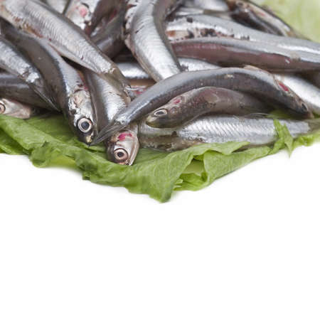 Fresh anchovies. photo