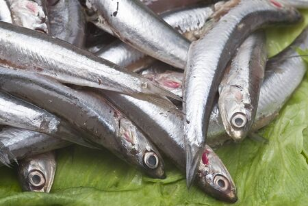 Fresh anchovies. Stock Photo - 8759670