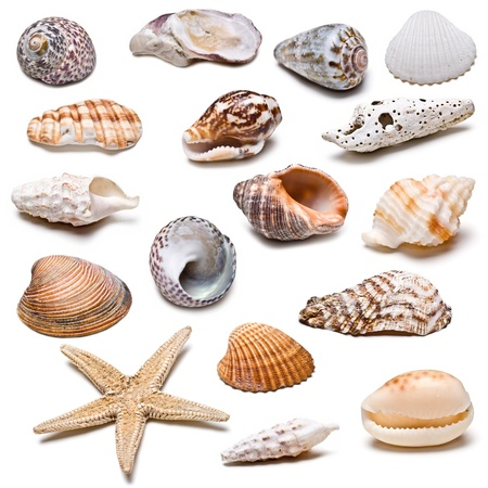 Collection of seashells isolated on a white background.