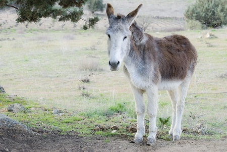 Donkey in a meadow. Stock Photo