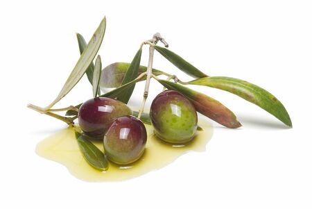 Green olives on their branch and some olive oil. photo