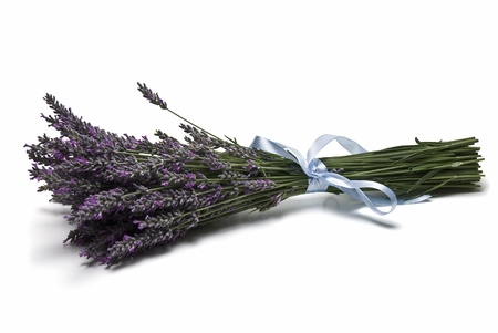 lavender bushes: A bunch of lavender isolated on a white background. Stock Photo