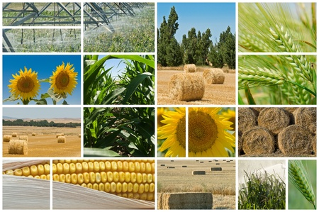 biofuel: Collage made of photos about agriculture. Stock Photo