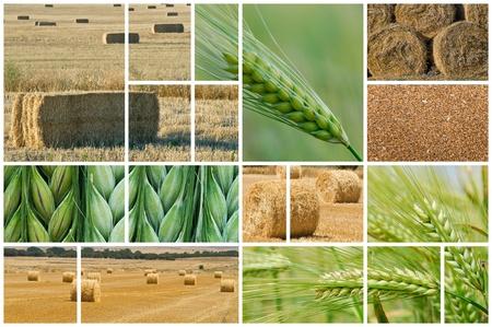 農業についての写真のコラージュを作った。
