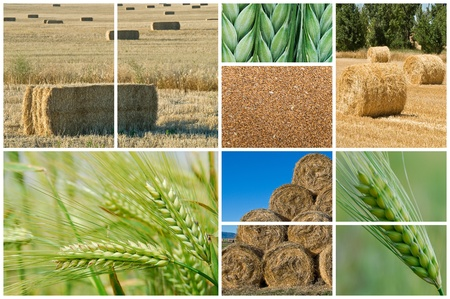 Collage made of photos about agriculture. photo