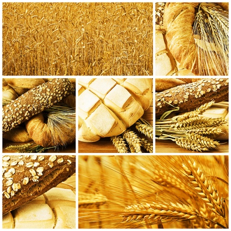 wholemeal: Collage made of pictures about bread and cereals.
