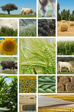 Collage with pictures about agriculture and animal husbandry. photo