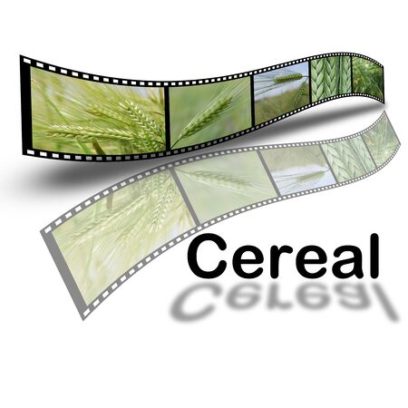 Design about cereals in film style isolated over a white background. photo