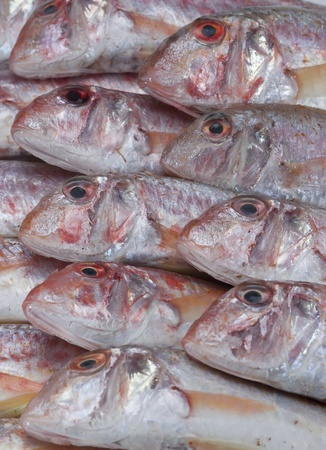 goatfish: A group of fresh red mullets showing its texture and color.