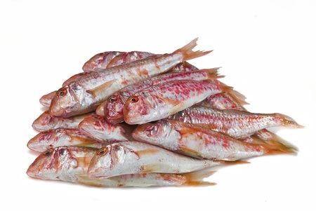 goatfish: Fresh and raw red mullets over a white background. Stock Photo