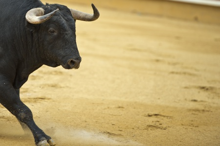 bullfighting: Bull in the bullring with a copy space made of arena