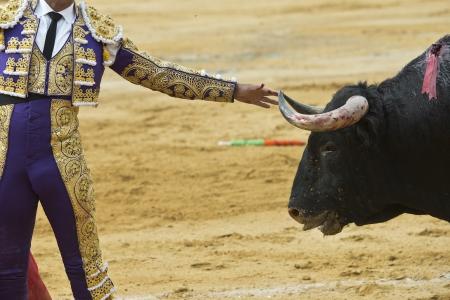 corrida de toros: Un torero está en contacto con el toro