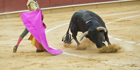 bull fight: A matador fighting in a typical Spanish bullfight
