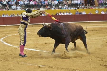 bullfight: Nailing two harpoons called  banderillas  on the bull  Editorial