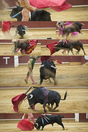 gaff: Collage about bullfighting made of pictures from different moments of the bullfight  Editorial