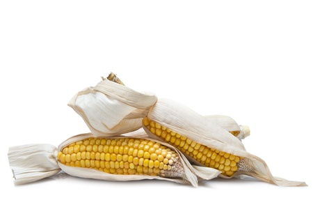 Dry corn ears isolated over a white background  photo
