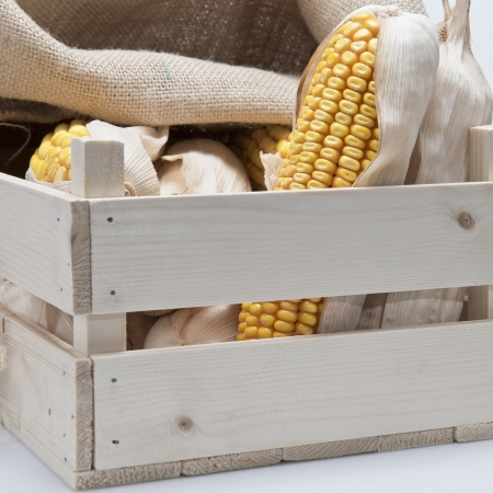 mealie: Wooden crate full of corn ears isolated on a white background