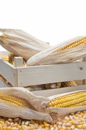 Wooden crate full of corn ears isolated on a white background photo