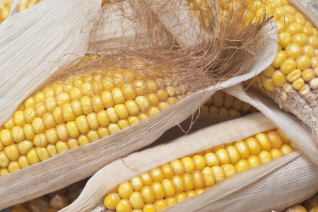 mealie: Closeup from some dried corn ears showing the kernels with good detail