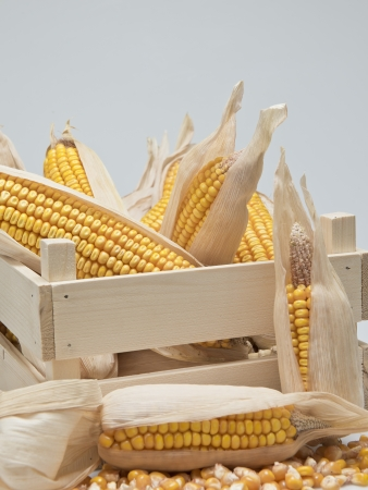 cereal box: Wooden crate full of corn ears isolated on a white background
