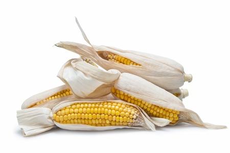 elote: Orejas de maíz seco aislados sobre un fondo blanco