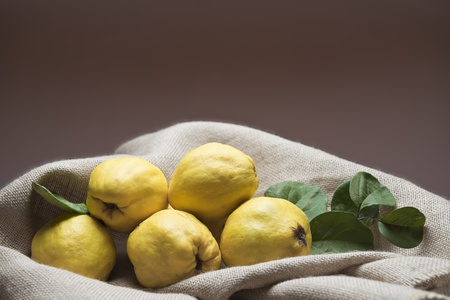 Still life with premium fresh quinces freshly harvested to cook.  photo