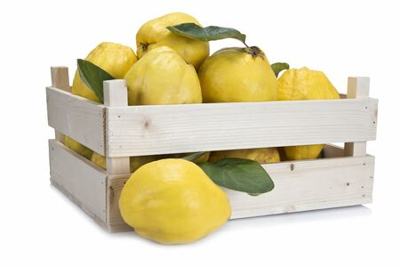 quinces: Crate with premium fresh quinces freshly harvested to cook.