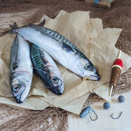 mackerel: Still life about sportive fishing for mackerel and some related items