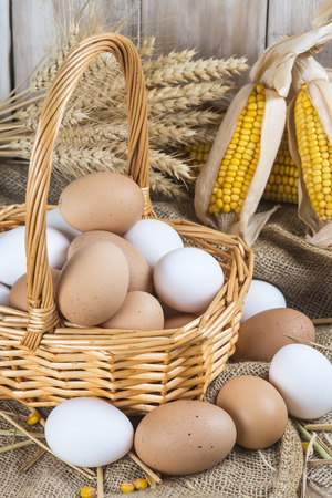 coop: Basket with fresh range eggs and cereals to feed hens in the hen house Stock Photo