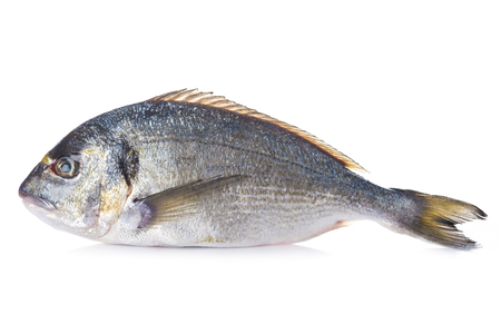 sparus: Raw Gilt-head sea bream fish isolated on a white background