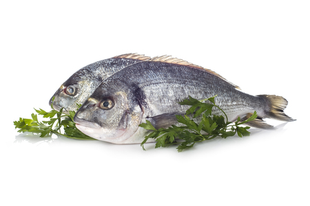 dorade: Raw gilt-head sea bream fishes garnished with parsley isolated on a white background Stock Photo