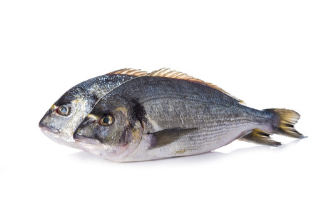 sparus: Raw gilt-head sea bream fishes isolated on a white background Stock Photo