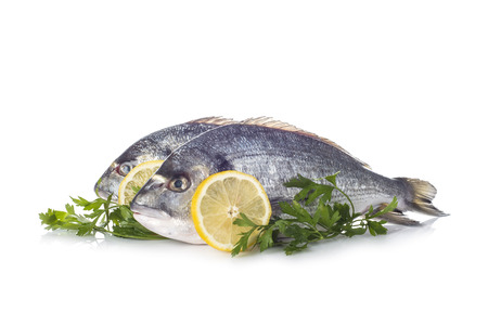 dorade: Raw gilt-head sea bream fishes garnished with parsley and lemon slices isolated on a white background Stock Photo