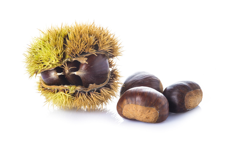Chestnuts in its spiny burr isolated on a white background photo