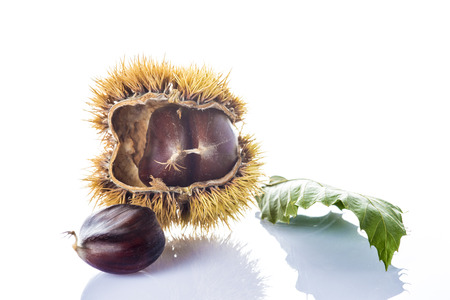 Chestnuts with leaves and its spiny burrs isolated on a white background a product of autumn photo