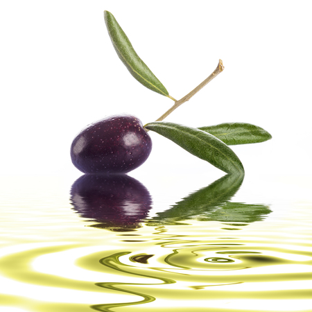 kalamata: Premium raw olive with its leaves and branch on a white background with liquid reflections