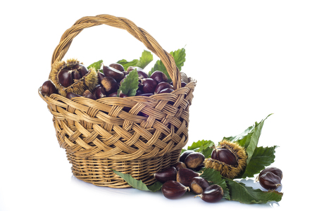Basket with chestnuts and its leaves and burrs isolated on a white background photo