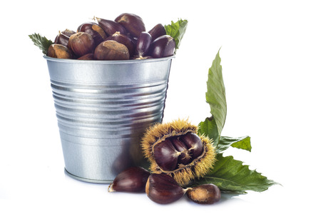 Chestnuts in a tin bucket with its leaves an spiny burrs isolated on a white background photo