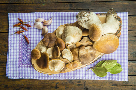 edulis: Assortment of mushrooms and ingredients for cooking on the table of the kitchen Stock Photo