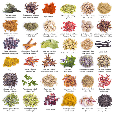 grounds: Spices and herbs set with a great assortment isolated on a white background and With Their scientific names and Their names in Ingl�s, Spanish and French