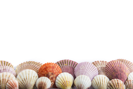 starfish beach: Seashells isolated on a white background with space for advertising